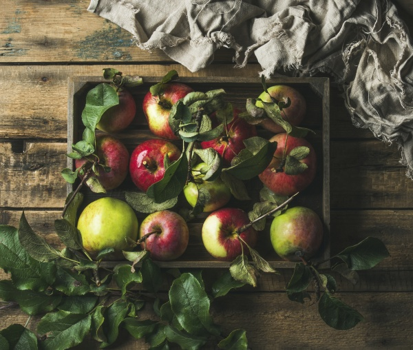 seasonal garden harvest colorful apples with