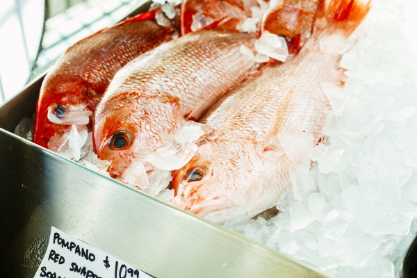 cold gleaming fresh red snapper stacked