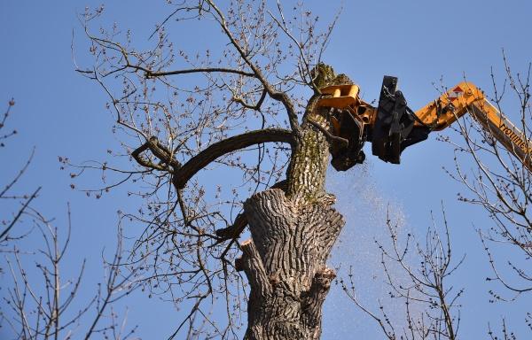 chop down a tree