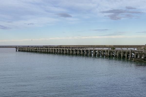 otago shag colony on sumpter wharf