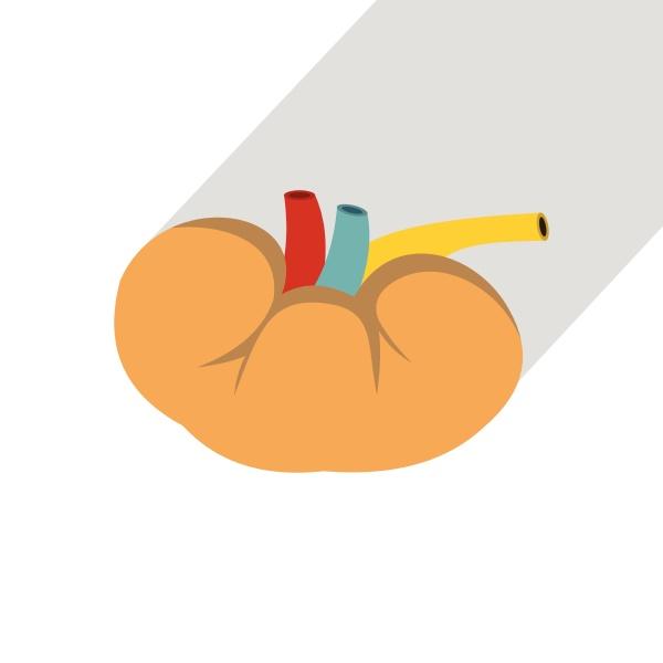 kidney icon flat style