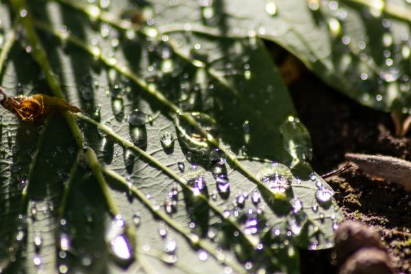 macro of rain drops on a