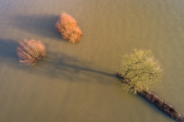 aerial view of trees in submerged