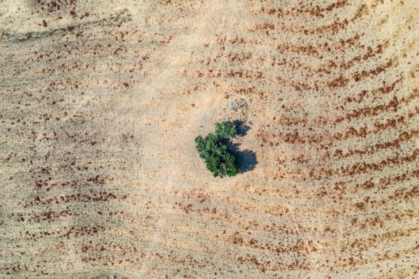 aerial view of tree in field