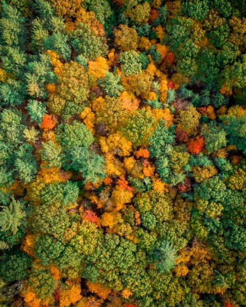 aerial view of trees looking like