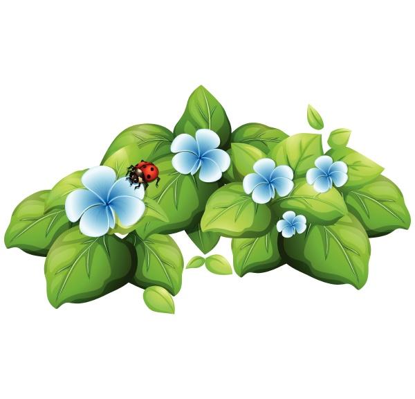 blue flower and ladybug