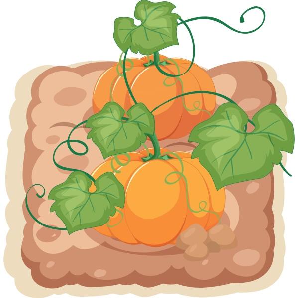 an isolated pumpkin farm