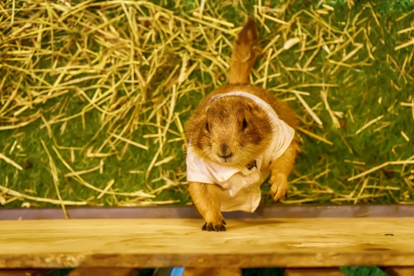prairie dog are poses photography