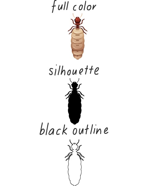 set of ant in color silhouette