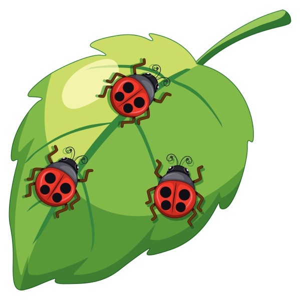 ladybug lady bettle insects on
