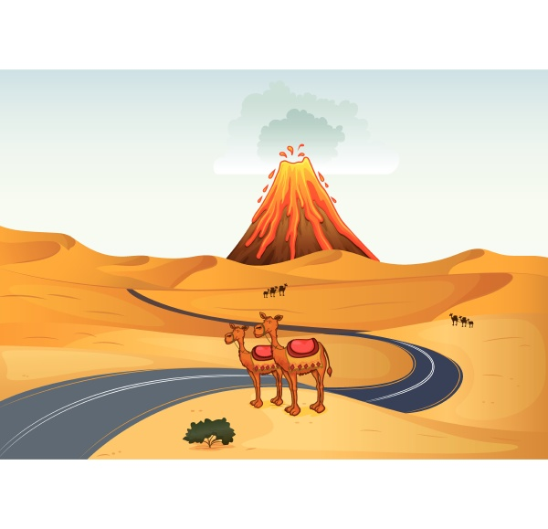 camels in front of a volcano