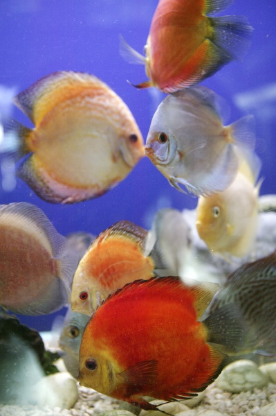colorful fishes in fish tank