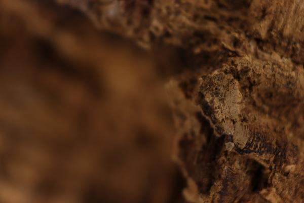 cork natural bark industry macro abstract