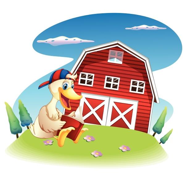 a duck reading near the barnhouse