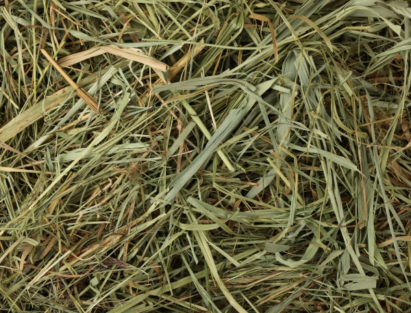background of natural dried hay and