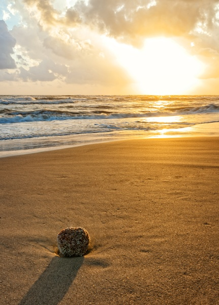 closeup of beach with sea sponge