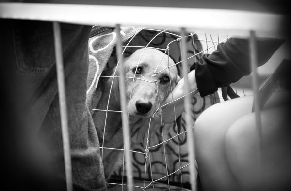 gaze of a sad dog locked