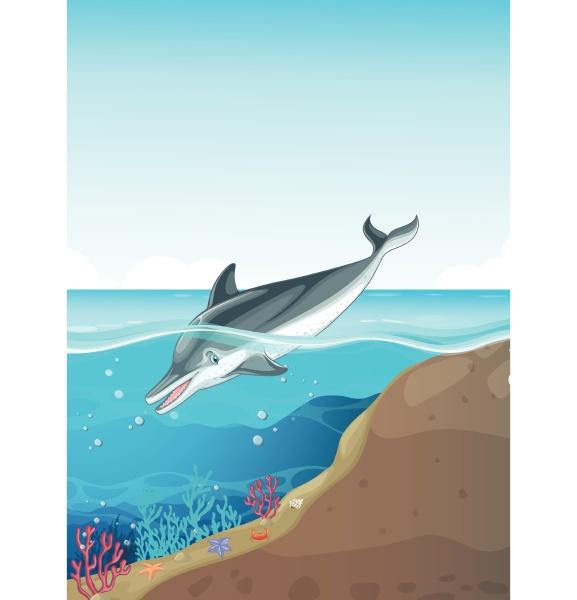 dolphin swimming under the sea