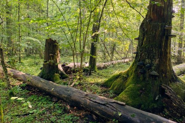 party declined broken spreuce trees