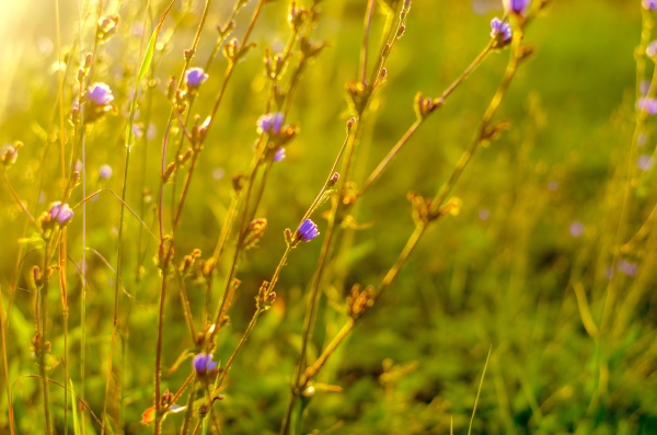 atmospheric natural background with meadow vegetation