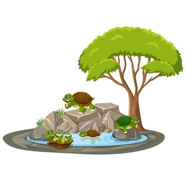 isolated scene with many turtles around