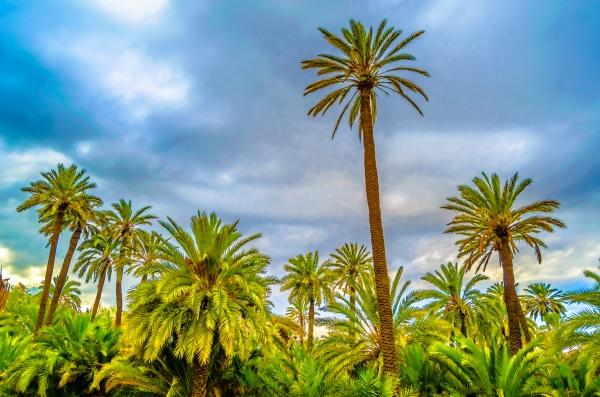 palm tree colorful illustration