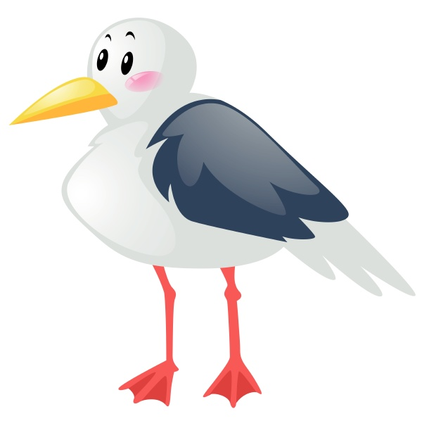 seagull on white background