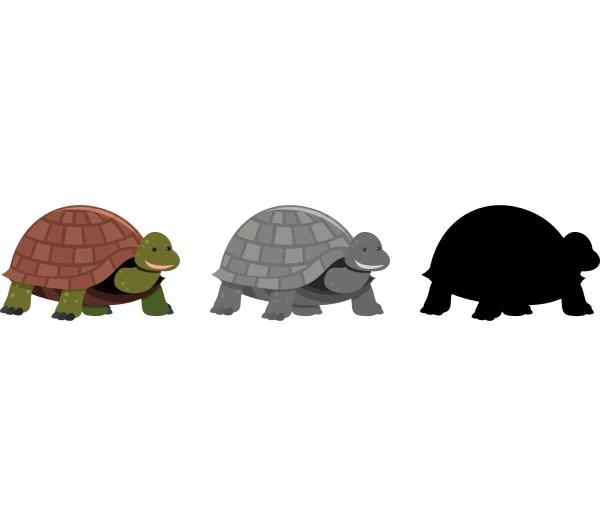 tortoise set of different variations