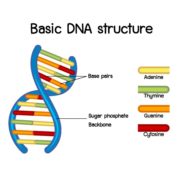 science of basic dna structure poster