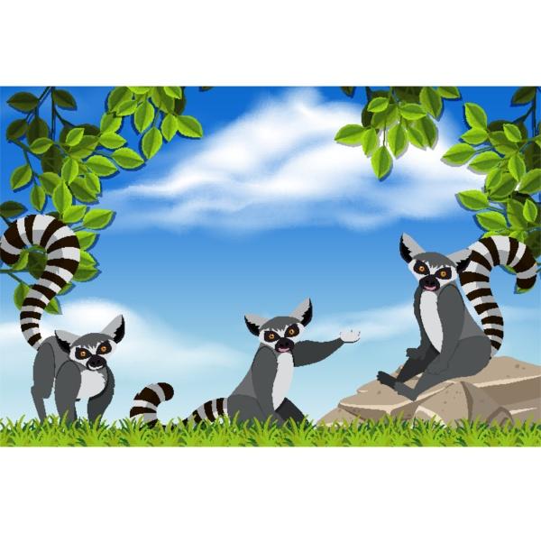 raccoons in nature scene