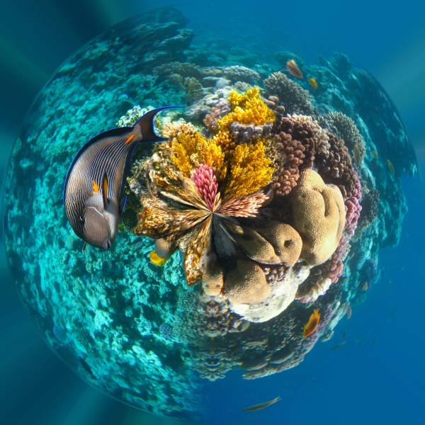underwater, world., coral, fishes, of, red - 30572538