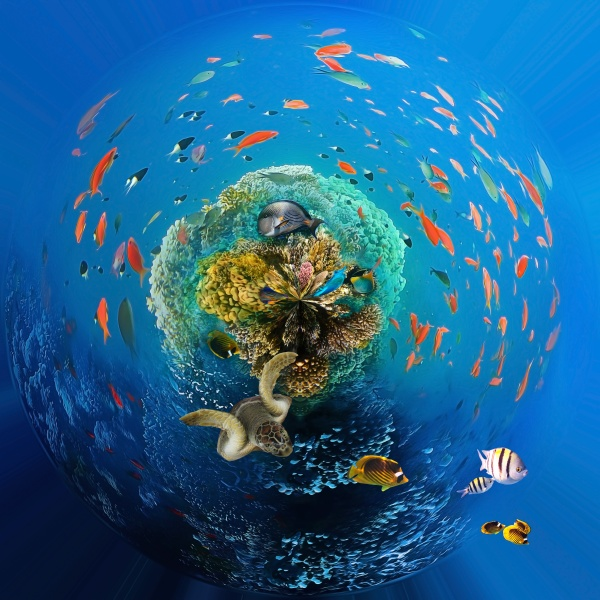 underwater, world., coral, fishes, of, red - 30572543