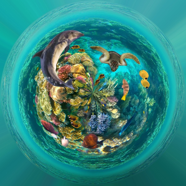 underwater, world., coral, fishes, of, red - 30572546