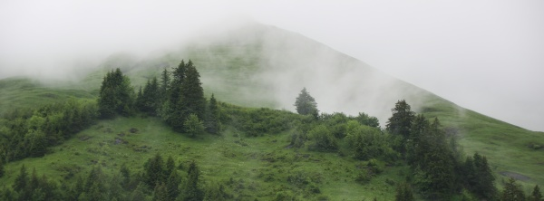 green mountain meadow and trees seen