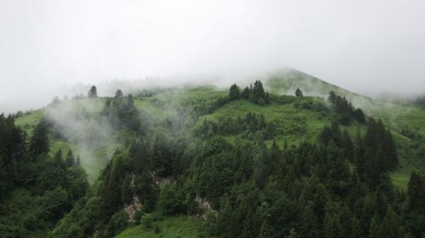 fog creeping along green mountain meadows