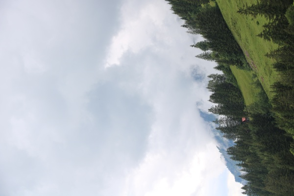 green mountain meadow pine forest and