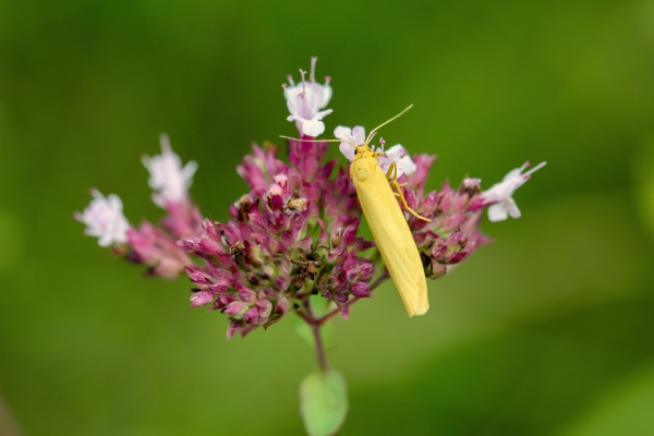 portrait of a moth or day