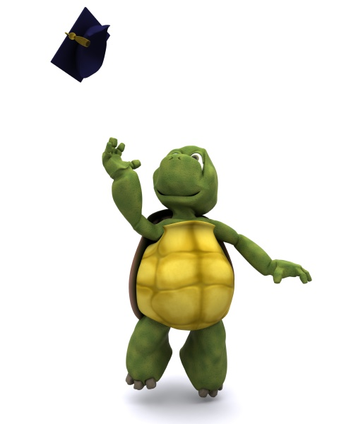tortoise celebrating graduation