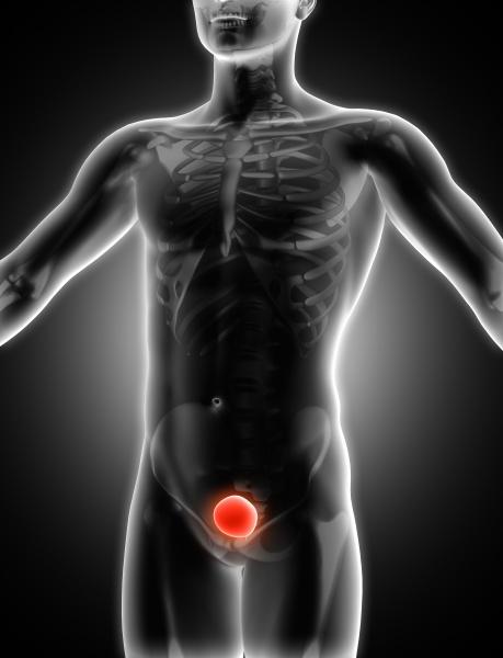 3d medical image showing bladder