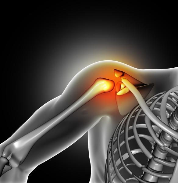 3d medical image of shoulder bone