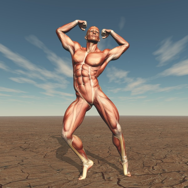 3d male body buildern with muscle