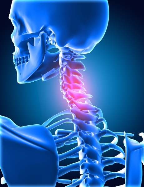 3d medical background of skeletong with