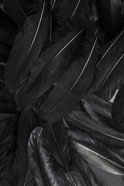 black feather abstract background texture dark