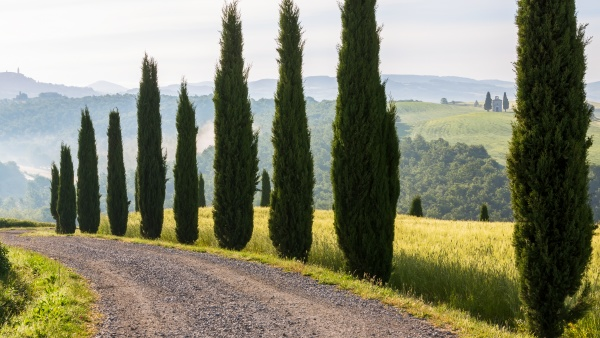 dirt track and cypress trees capella