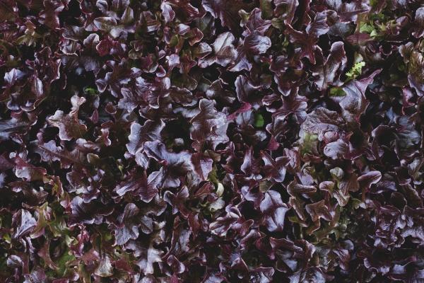 high angle close up of purple