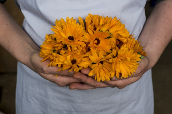close up of person holding bunch