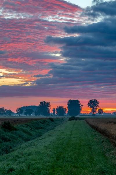 foggy sunrise in the donaumoos in