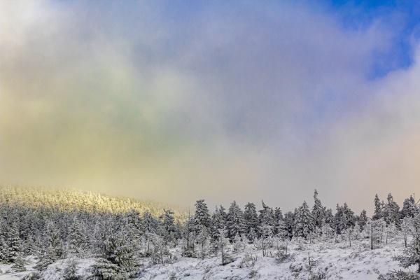 sunshine on snowed in icy fir