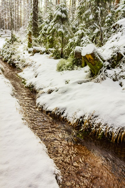snowed in fir trees steam landscape