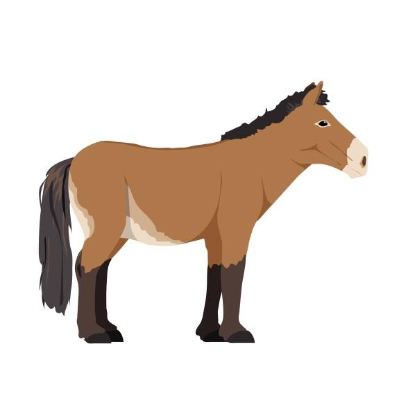 equus ferus przewalskii przewalskis horse